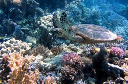 Korálový útes v Rudém moři