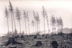 Před sto lety ničila lesy bekyně mniška