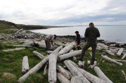 Brněnští vědci zkoumali dřevo připlavené k islandským břehům