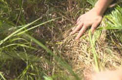 Vyschlé rašeliniště na Strádovce