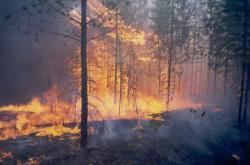 Požár lesa v Krasnojarském kraji
