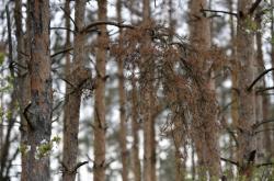 Stromy schnou i v okolí Brna