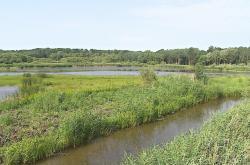 Druhově rozmanitá příroda u řeky Dyje