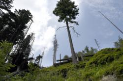 Les v Jeseníkách postižený kůrovcovou kalamitou