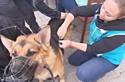 Psi bezdomovců dostali očkování proti vzteklině