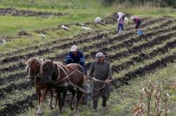 Ukrajinci vykopávají brambory