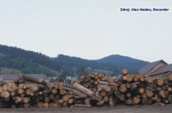 V Rumunsku nelegální těžbou mizí zelené plíce Evropy