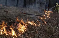 Požáry v Austrálii