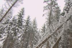 Na západě Čech chybí dřevorubci