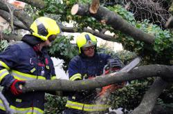 Hasiči v Praze zasahovali u popadaných stromů