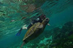 Moře u Galapág
