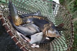 V nádrži v Horním Jiřetíně hromadně uhynuly ryby