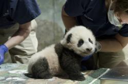 Pandí mládě