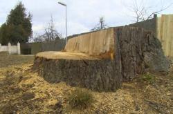 Kácení stromů ve Slavonicích