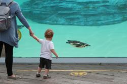 Lidé budou moci od pondělka navštěvovat zoologické zahrady