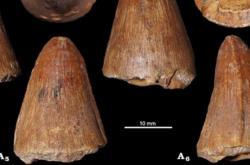 Zuby druhohorních příbuzných krokodýlů z Česka