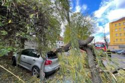 Popadané stromy po silném větru v Praze