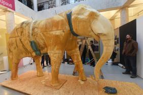 Preparace slona