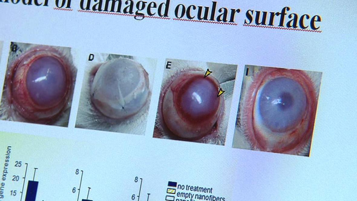 Oční bulva laboratorního králíka léčená pomocí kmenových buňěk
