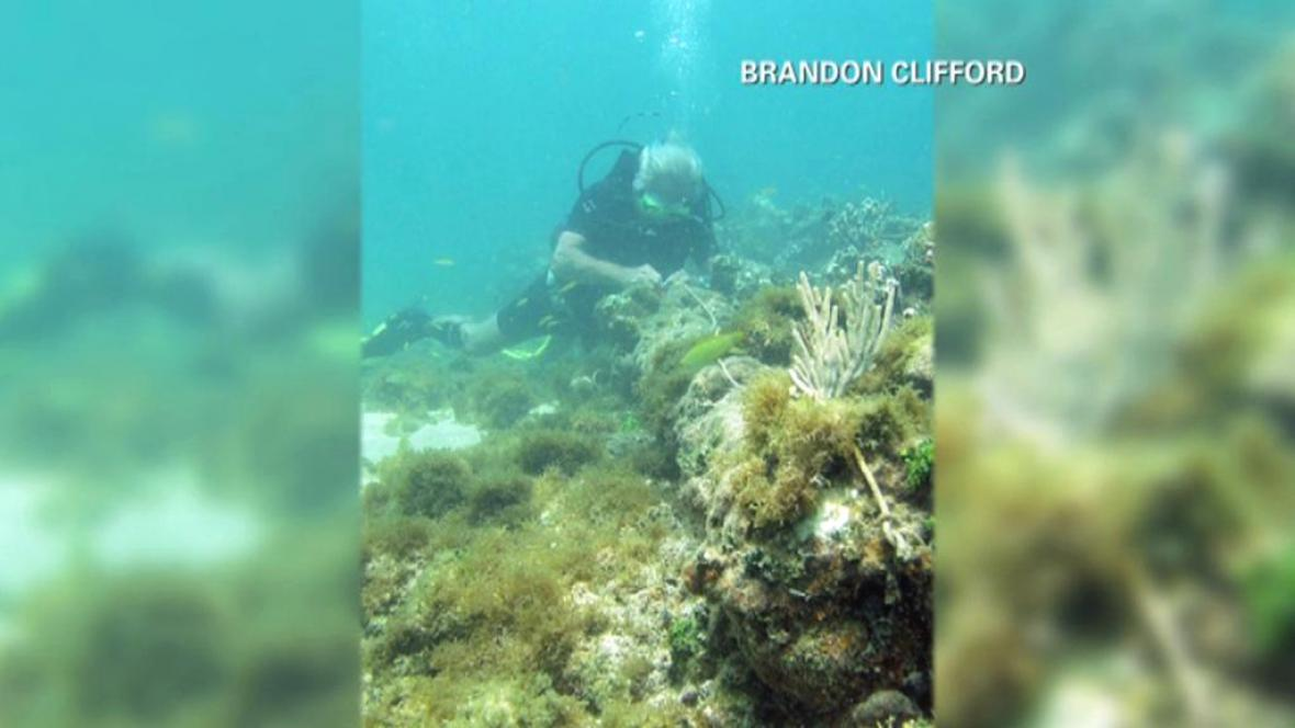Je pod korály a řasami Kolumbova Santa Maria?