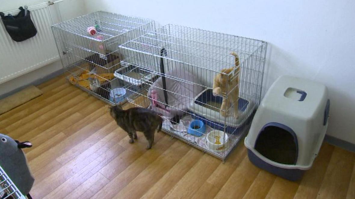 Vykastrované kočky v klášterském útulku
