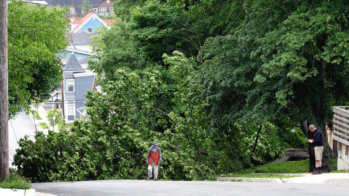 Stromy poničené bouří Arthur v Novém Skotsku