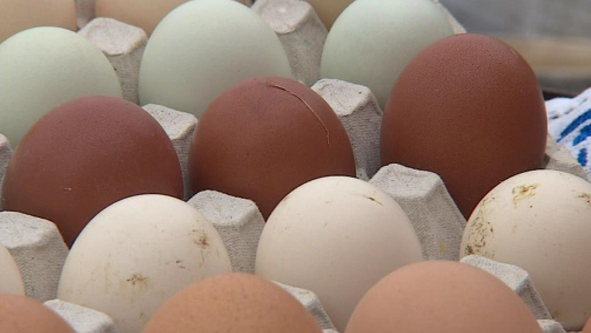 Barevná vajíčka z farmy v Suchohrdlech u Miroslavi