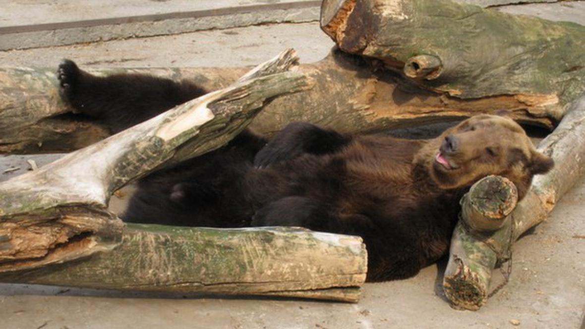 Ukrajinci zachraňují zvířata ze zoo v Charkově