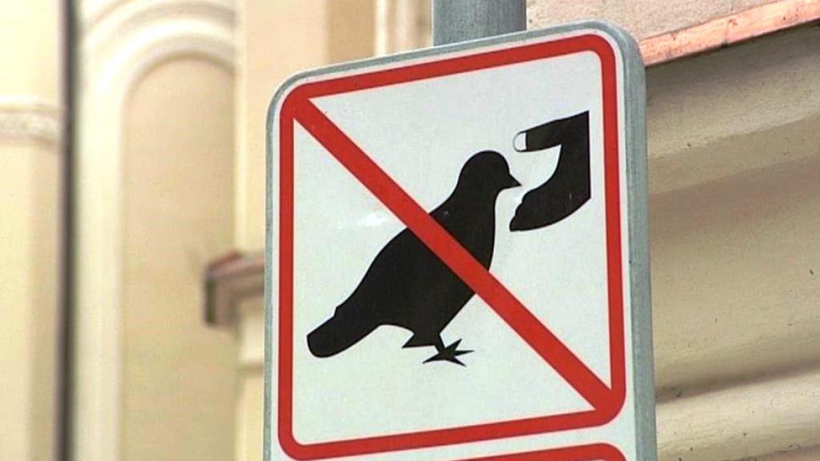 Zákaz krmení holubů