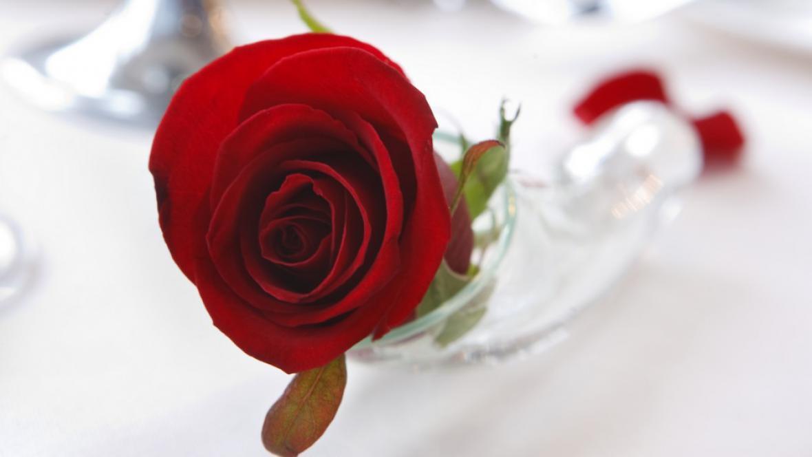 Valentýnská růže