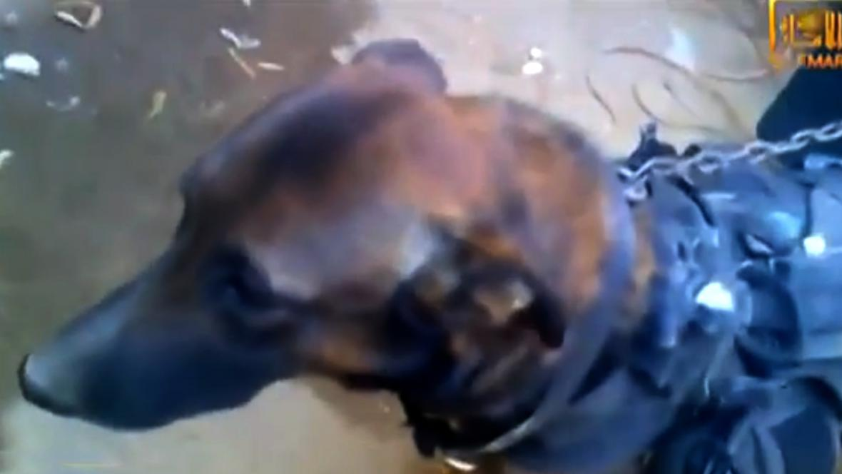 Pes zadržený bojovníky Talibanu
