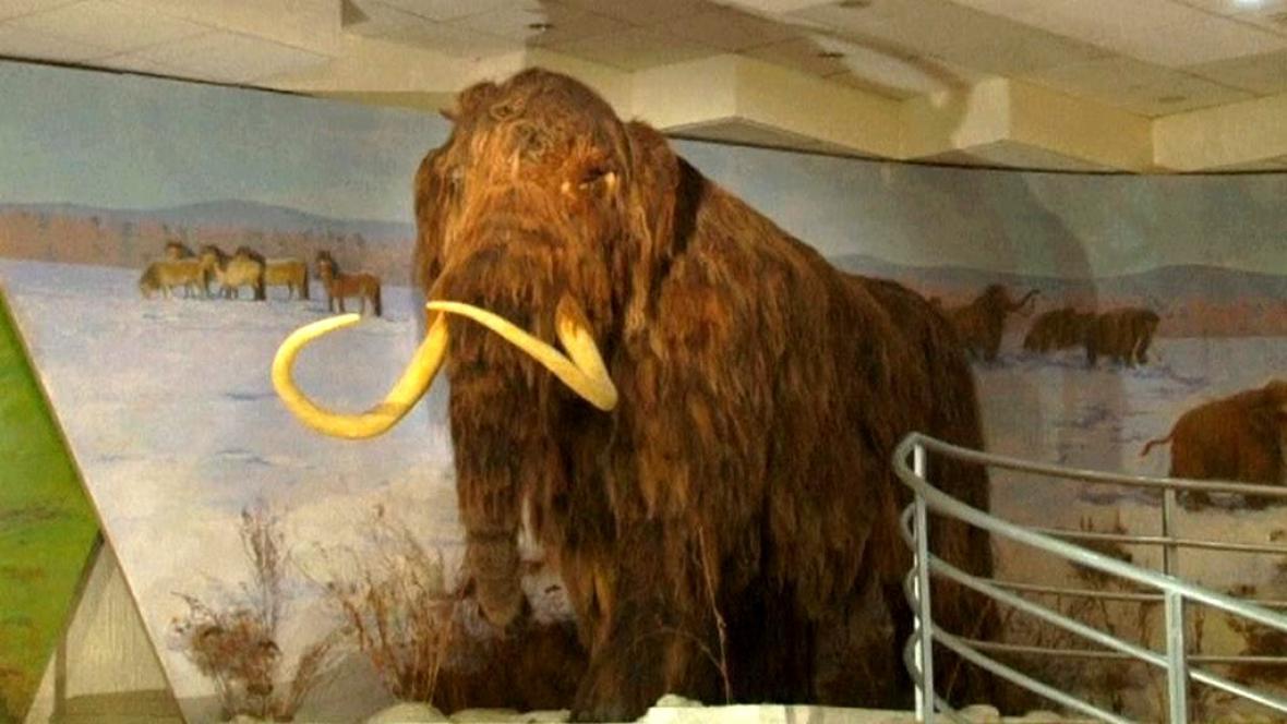 Vycpaný mamut