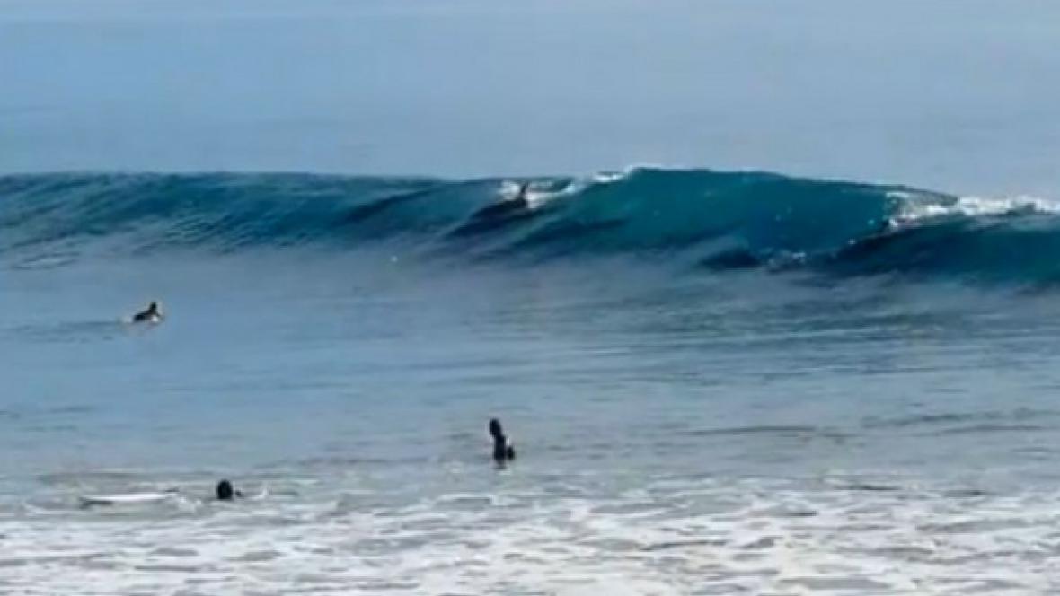 Delfíni narušili závod v Santa Barbaře