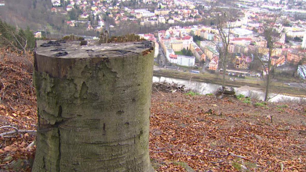 Kácení na kopci v Děčíně