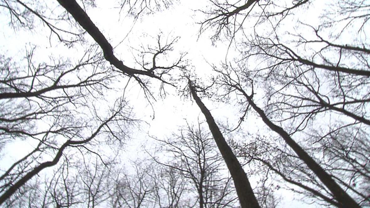 Lesy kvůli oteplování houstnou