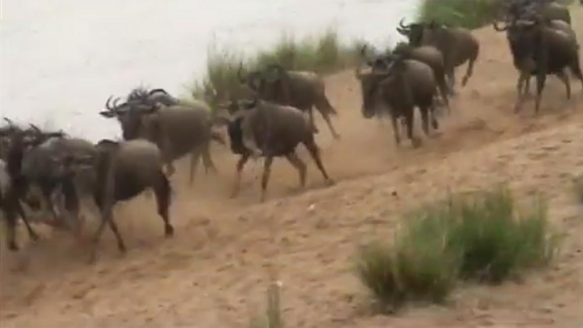 Pakoně se vracejí do Keni