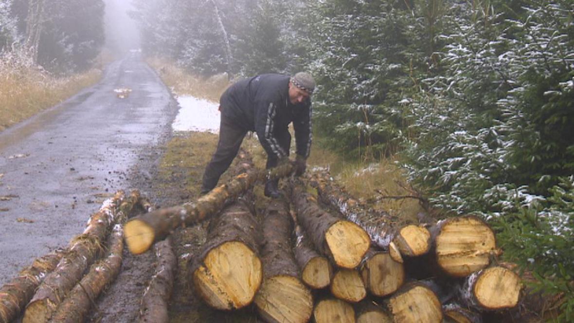 Odklízení napadených stromů
