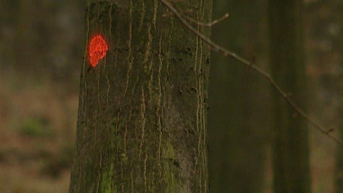 Strom ke kácení
