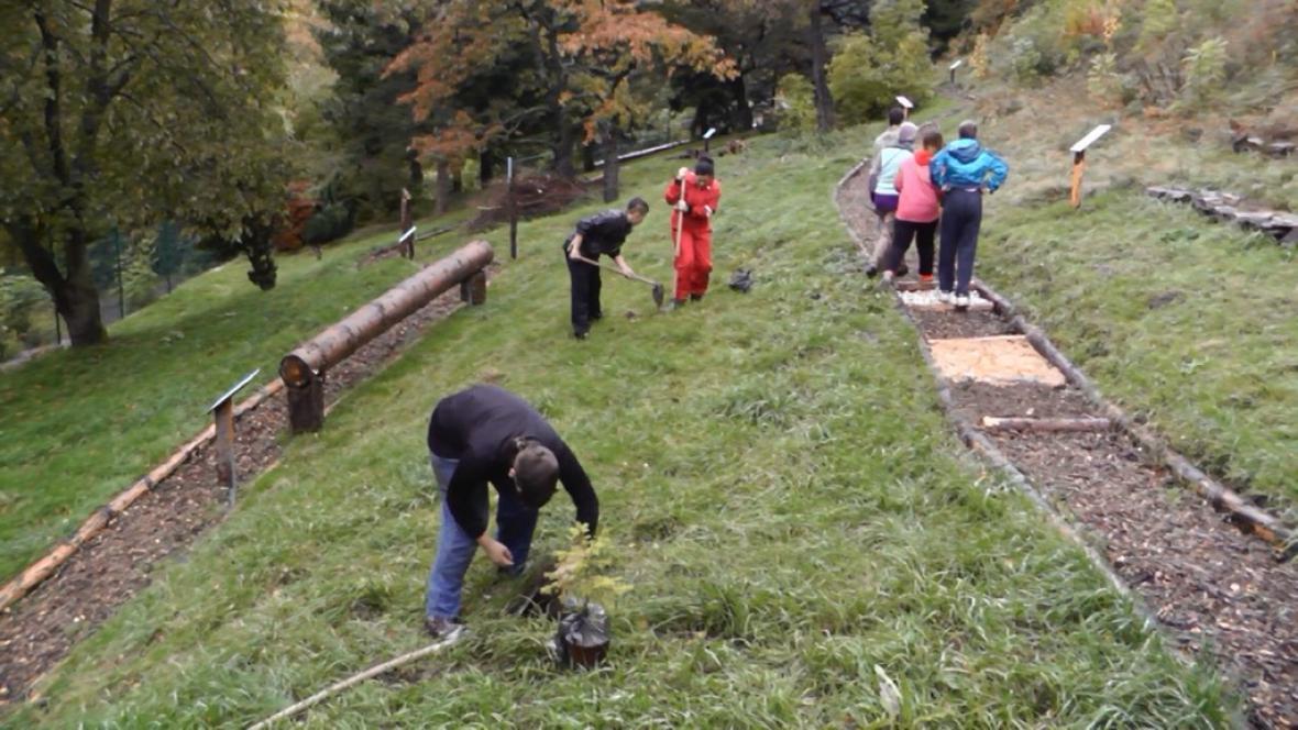 Dobrovolníci ZŠ Jáchymov sázejí stromky