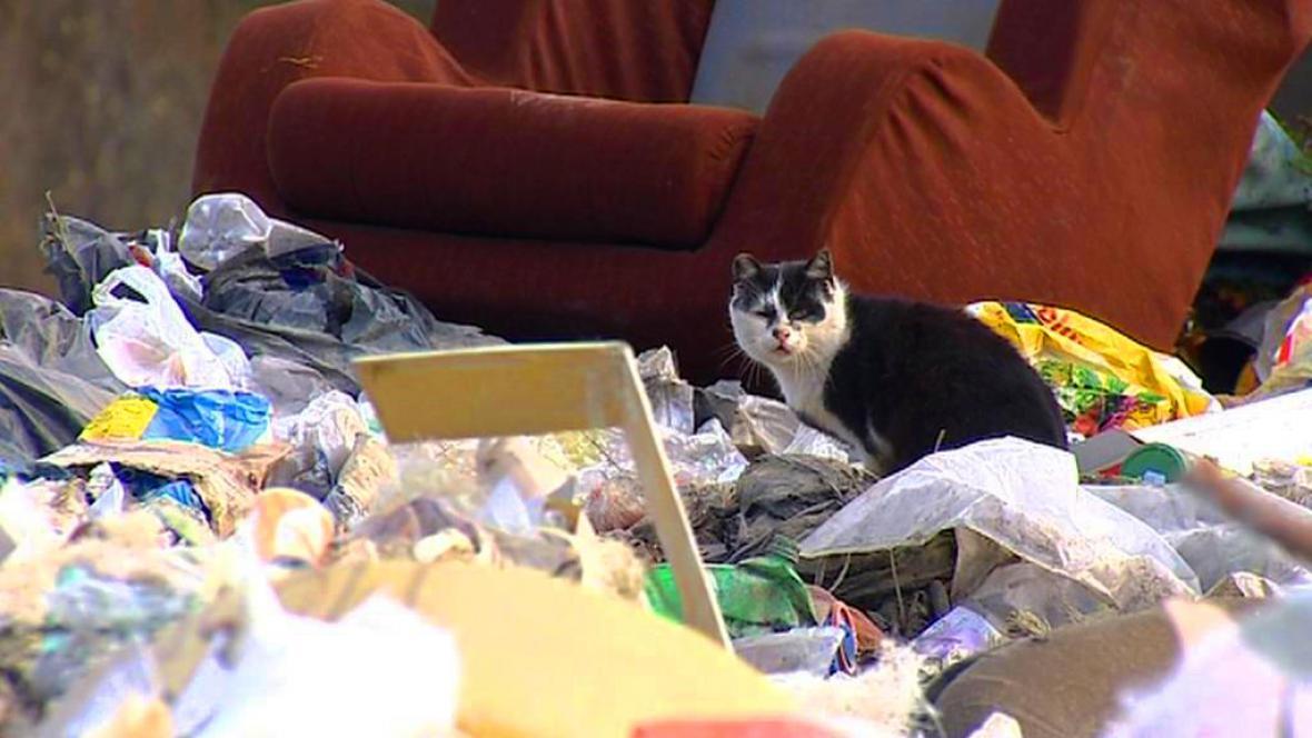 Skládka odpadu u Kaplice