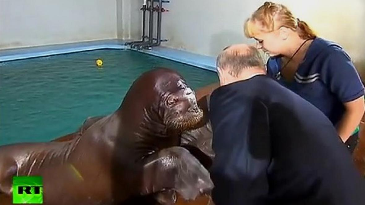 Putin s mroži