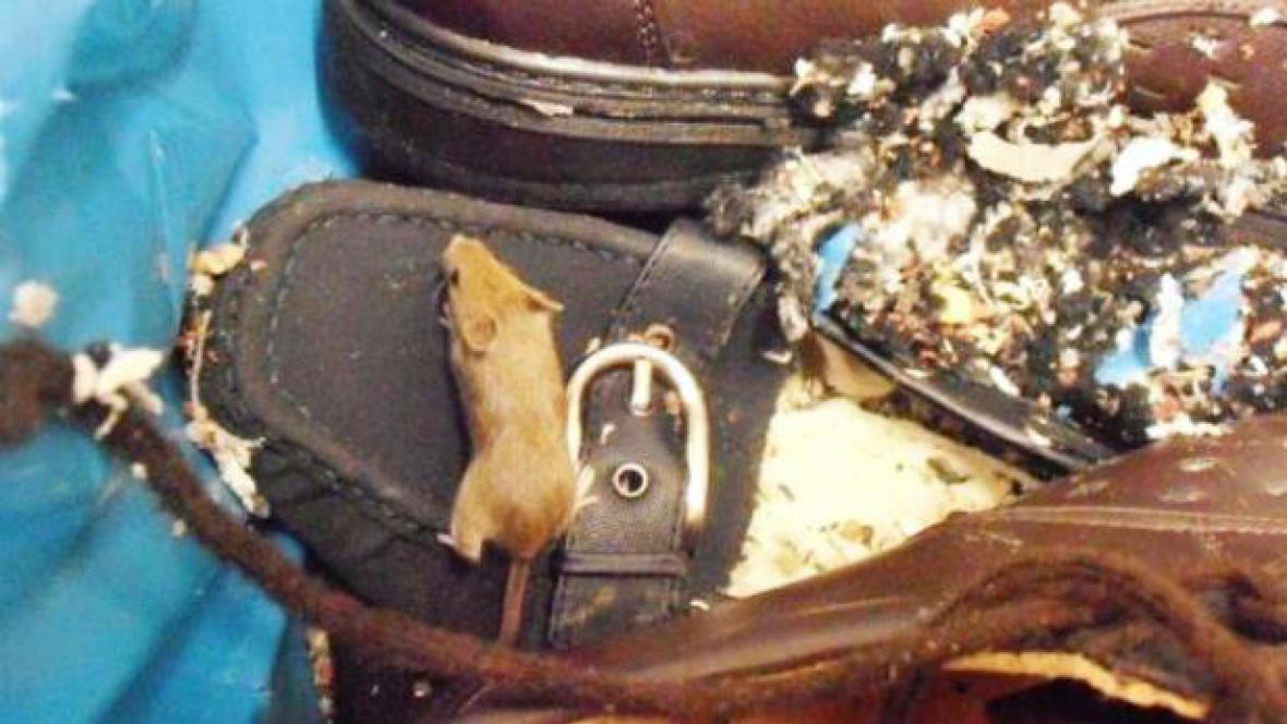 Myš v letovickém Penny Marketu