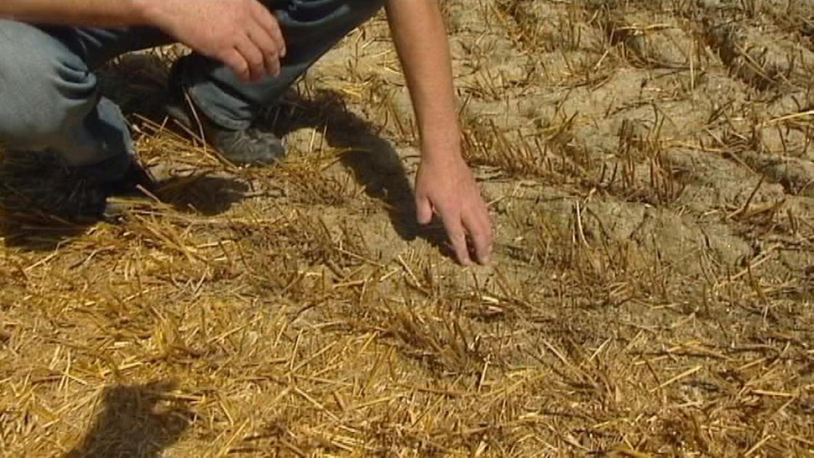 Sucho trápí zemědělce