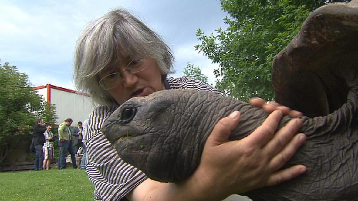 Pražská želva obrovská