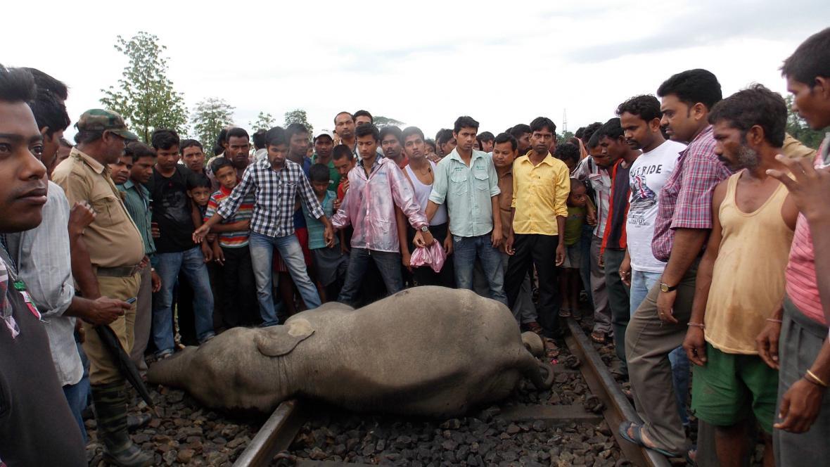 Při nehodě v Indii zemřeli čtyři sloni