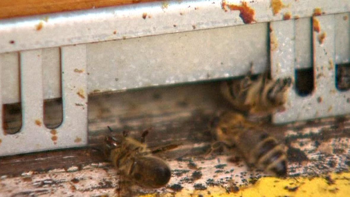 V Evropě ubývá včel