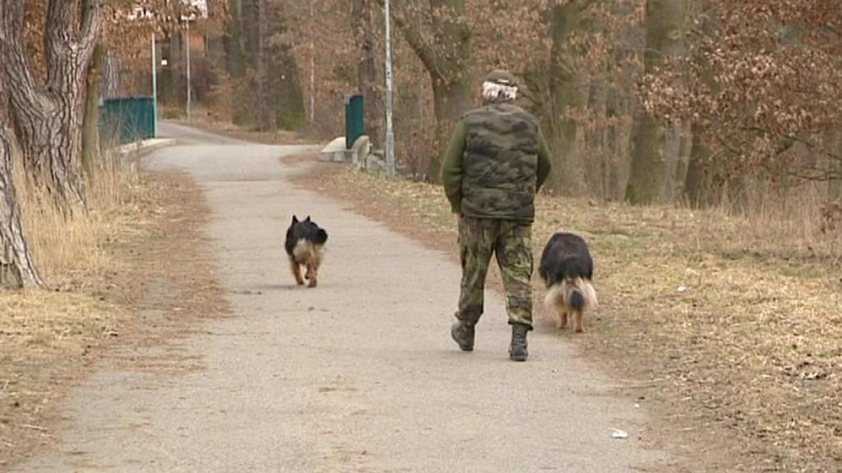 Volně pobíhající psi