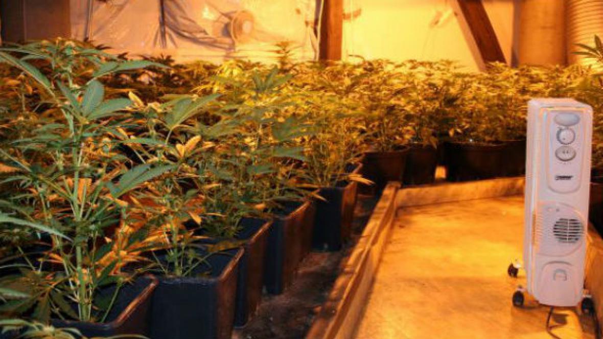 Marihuana pěstovaná v Modřicích