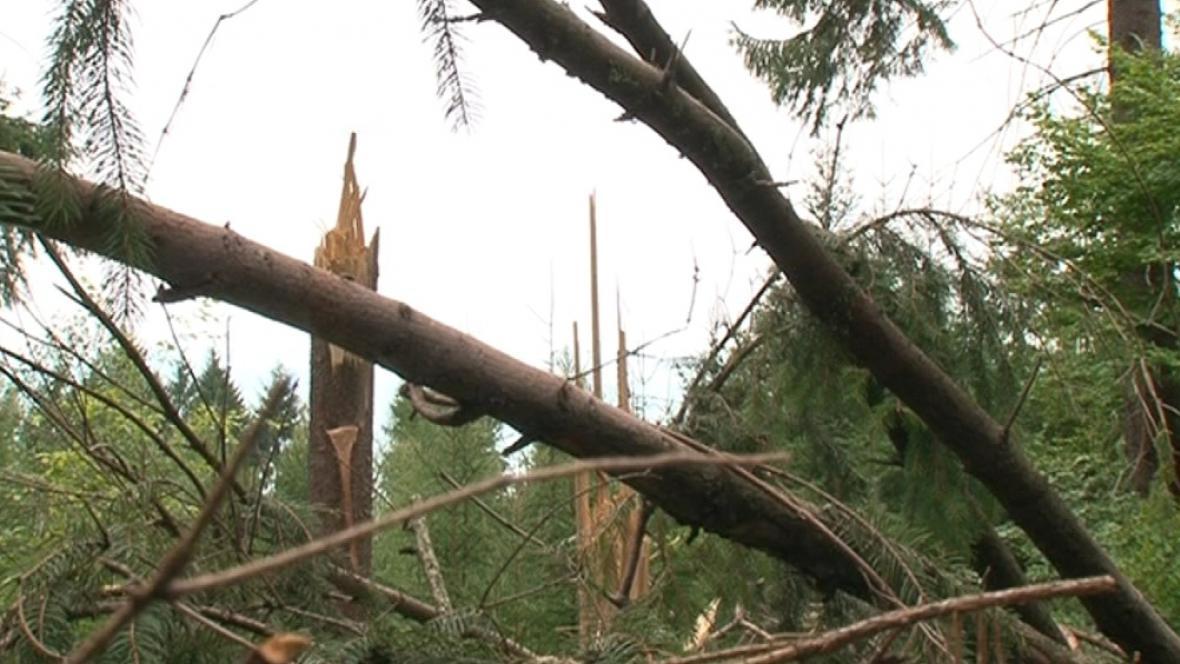 Vichřice za hodinu polámala 5 tisíc kubíků dřeva