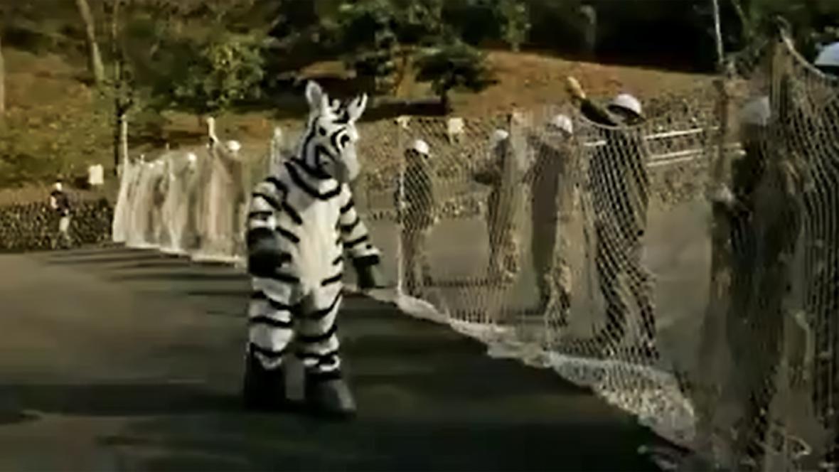 Nácvik odchytu zvířat v japonské zoo